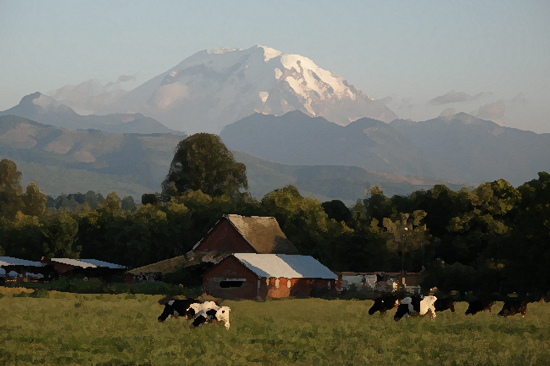 Mt. Rainier and Cows